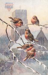 five robins on  leafless tree branch, two above, three below, church behind