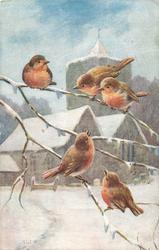 five robins on  leafless tree branch, three above, two below, church behind