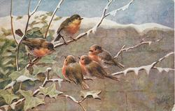 five robins on tree branch, ivy left, wall behind