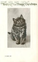 A SAUCY KIT  black kitten