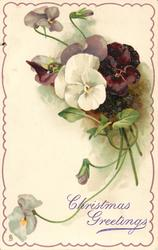 one white and two mauve pansies