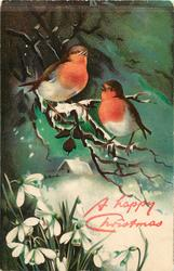 two robins sit on snowy branches above snowdrops,distant snowy cottage
