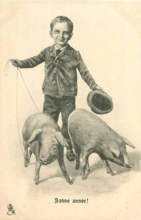 boy drives two pigs, leashes to back legs