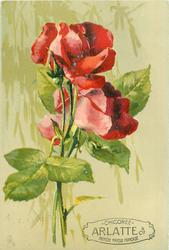 two red roses & bud