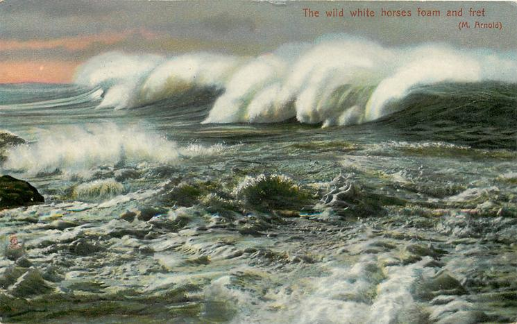 THE WILD WHITE HORSES FOAM AND FRET