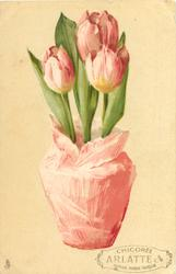 tulips in pot trimmed with pink paper