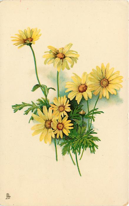 seven yellow daisies with brown/yellow centres