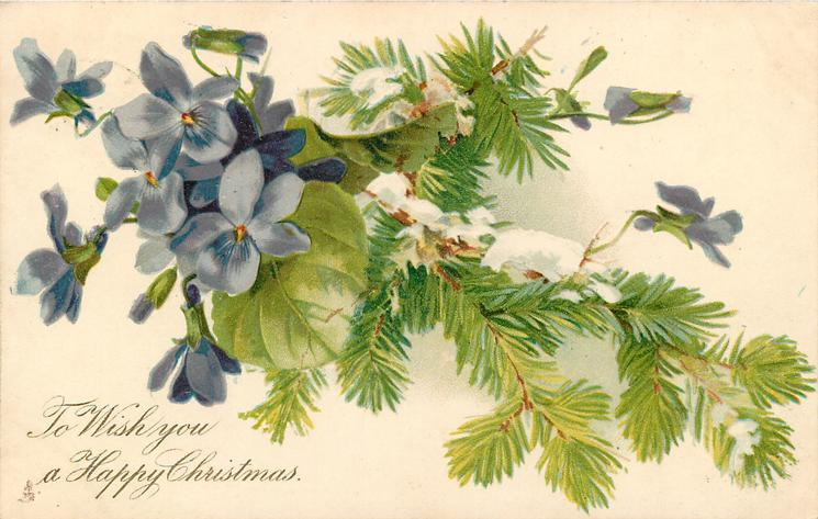 TO WISH YOU A HAPPY CHRISTMAS.   blue violets to left of conifer branch