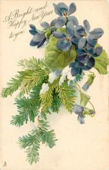 A BRIGHT AND HAPPY NEW YEAR TO YOU.  violets above, evergreen branch hangs down