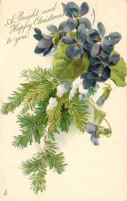 A HAPPY CHRISTMAS TO YOU.  violets above,  evergreen branch hangs down