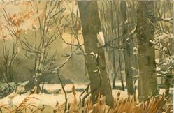 snowy winter forest scene, big trrees right, rushes front right