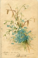 forget-me-nots, snowdrops & catkins
