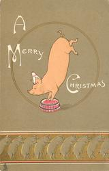 A MERRY CHRISTMAS  pig in clown hat balances on front feet on tub, line up of pigs along bottom of card