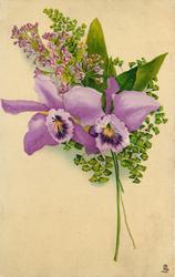 two orchids, purple with purple/yellow centres, faces forward , three stems to lower right, spray of lilac behind