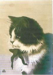 head & shoulders of cat with white blaze & black bow, facing & looking left