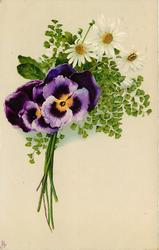 two pansies and three daisies