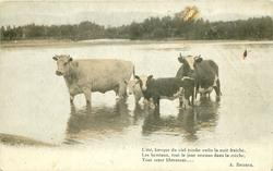 two cows & two calves stand in lake,