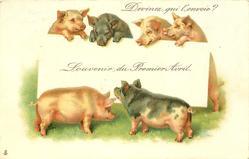 SOUVENIR DU PREMIER AVRIL  six pigs