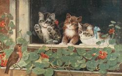 three little kittens looking out window watching robin on the window sill