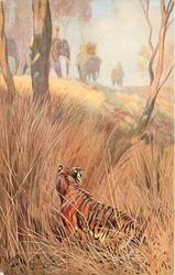 tiger lies in wait in reeds, caravan of elephants move right on hill above