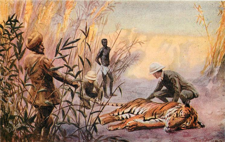 hunter inspects dead tiger, another examines its tail, beater & guide observe
