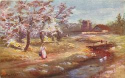 woman with pail by stream, blossom laden trees left