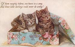 OF THREE NAUGHTY KITTENS, ONE HEARS IN A SONG, BUT THESE LITTLE DARLINGS COULD NEVER DO WRONG!