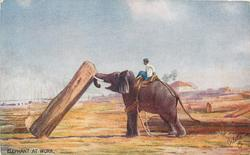 elephant facing left gets log up to 45 degrees