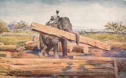 elephant  is carrying wood between trunk and tusks and two chains are pulling another piece