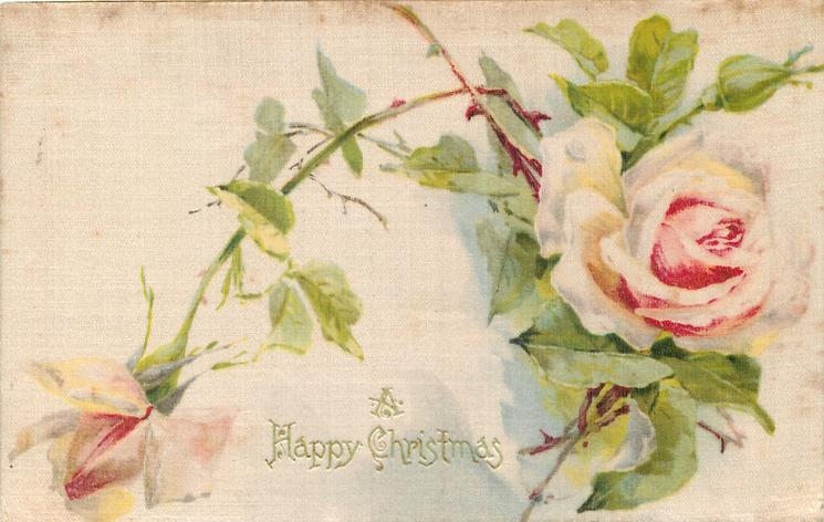 A HAPPY CHRISTMAS  two pink & white roses