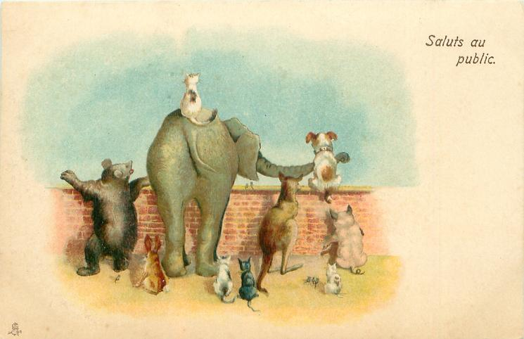 SALUTS AU PUBLIC  elephant, kangaroo, cats, bear & dog looking over wall