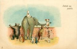 SALUTS AU PUBLIC  elephant, kangaroo, cats, bear & dog looking over wall