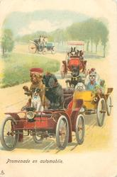 PROMENADE EN AUTOMOBILE  4 cars with dogs in each
