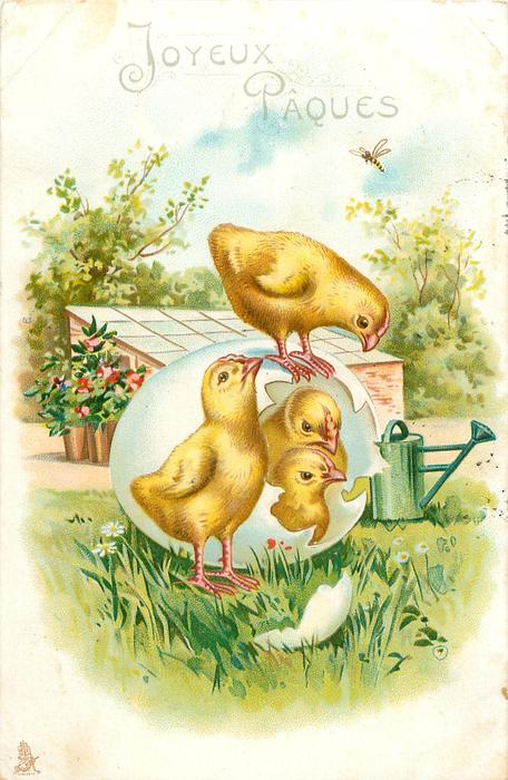 JOYEUX PAQUES  four chicks, two still inside fantasy egg, one stands on it looking down, another stands in front looking up