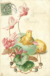 JOYEUX PAQUES  chick hatching from green Easter egg, pink cyclamen left