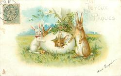 JOYEUX PAQUES  rabbit hatches from egg at foot of tree, three other rabbits look front