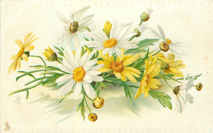 white & yellow daisies, stalks left