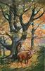 male deer bugling with box on tree behind deer, woods scene