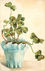 four leaf clovers plant in blue/ white pot