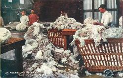 SORTING THE WOOL