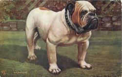 DICK STONE  bulldog