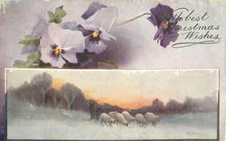 inset six sheep drinking at pond, two purple and one white flower above