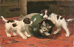 AN UNSAFE RETREAT  kitten protests from inside a broken jug being rolled about by two puppies