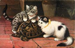 DID YOU SEE IT MOVE?  two kittens pester a tortoise