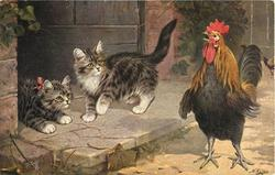 CHALLENGING ALL COMERS  two kittens intimidated by large crowing cockerel