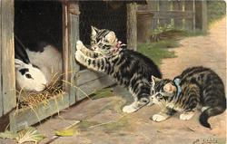CLAIMING ACQUAINTANCE  two kittens visit two rabbits in their hutch
