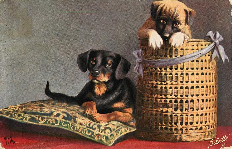 dachshund  on cushion and another dog in basket