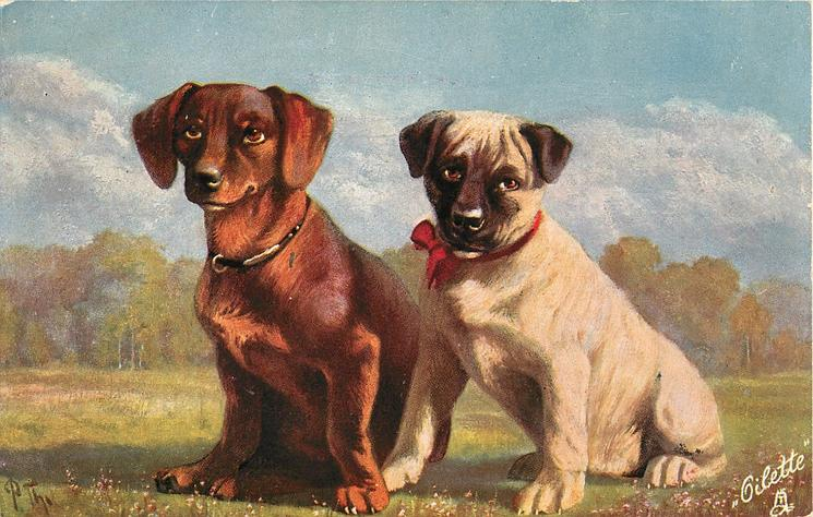 light brown dachshund and another, sitting on grass
