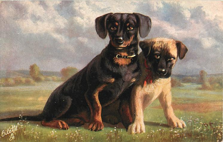 black/brown dachshund and another, sitting on grass