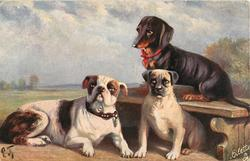 dark coloured dachshund on bench, bull terrier and another dachshund that looks left